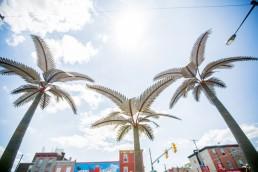 Palm Tree Streetscape Fairhill