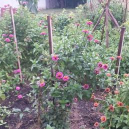 Fairhill-community-garden